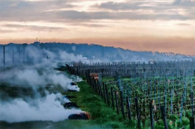 Burgundyfrost
