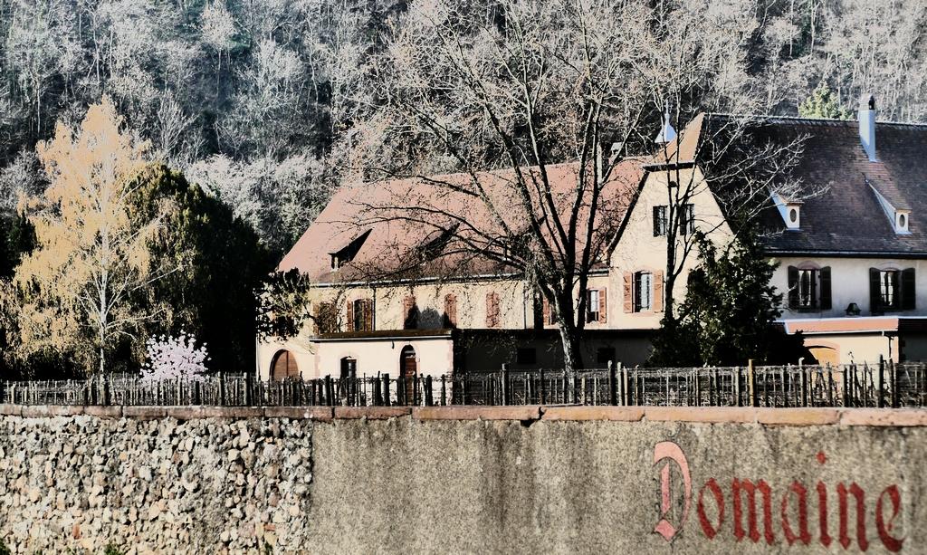 Elzasreis wijnprofessionals proefgroep 'Rechteroever' - Domaine Weinbach